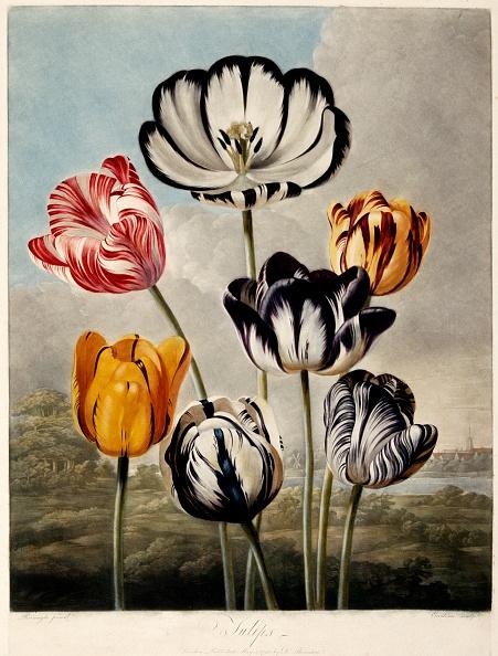静物「Tulips,」:写真・画像(3)[壁紙.com]