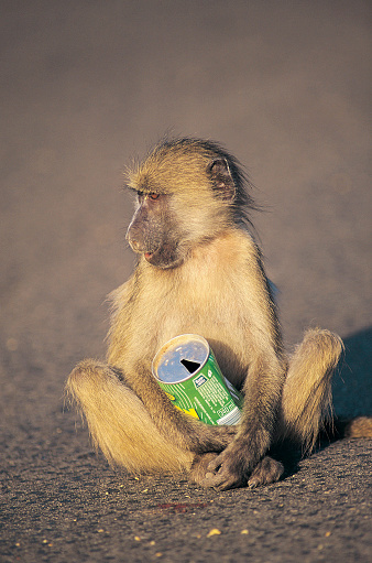 Eco Tourism「Monkey holding can of soft drink」:スマホ壁紙(2)