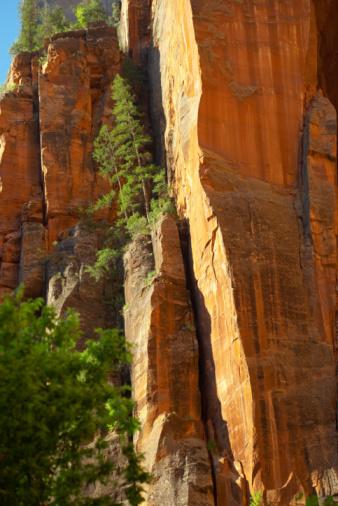 Steep「Zion National Park」:スマホ壁紙(8)