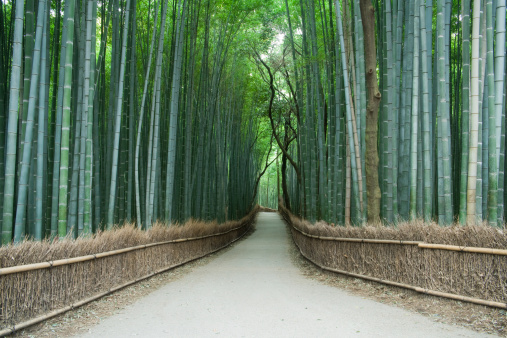 竹「Avenue of Bamboo grove」:スマホ壁紙(4)