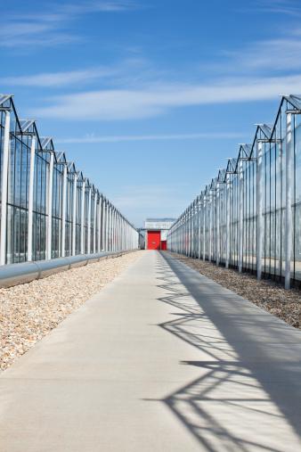 Chichester「Concrete walkway between greenhouses」:スマホ壁紙(18)