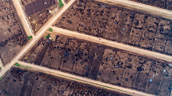 Slaughterhouse「Straight down aerial view of thousands of cattle in a feedlot」:スマホ壁紙(11)