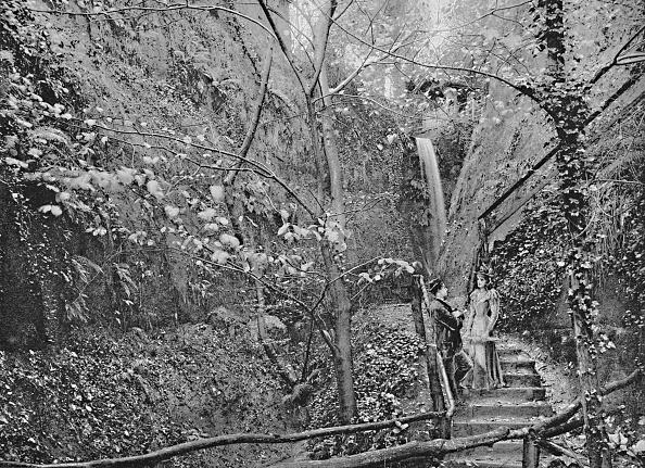 葉・植物「Shanklin Chine」:写真・画像(6)[壁紙.com]