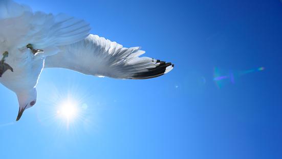 White Color「青い空、鳥のように自由を背景カモメ」:スマホ壁紙(5)