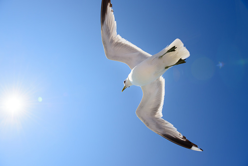 Seagull「Seagull against blue sky, free as a bird」:スマホ壁紙(15)
