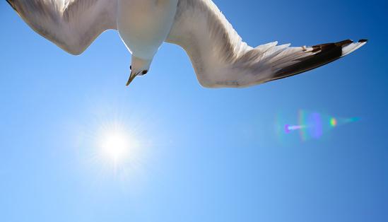 White Color「青い空、鳥のように自由を背景カモメ」:スマホ壁紙(4)