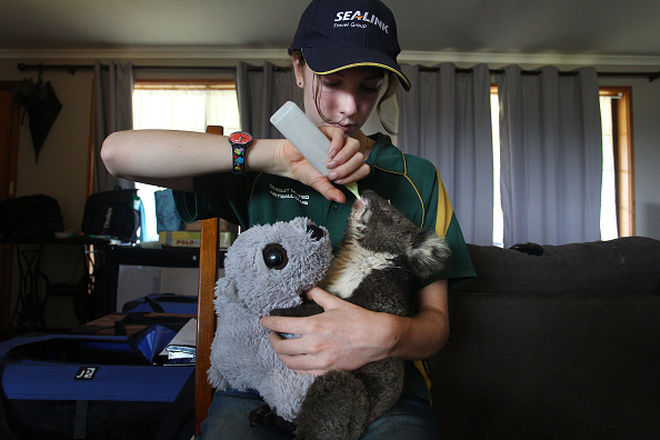 Animal「Bushfires Continue To Burn On Kangaroo Island As Army Reserve Arrives To Assist Clean Up Operations」:写真・画像(2)[壁紙.com]