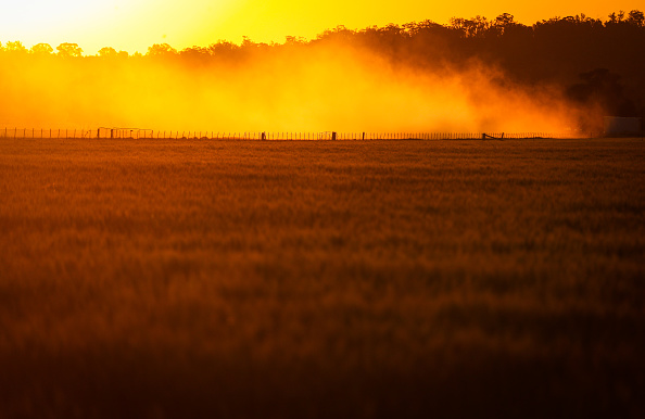 Wheat「Wheat Farmers Forced To Make Hay Following  Crop Failure Due To Drought」:写真・画像(13)[壁紙.com]