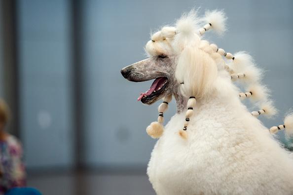 """ペット「Leipzig Holds """"Dog And Cat 2018"""" Pets Trade Fair」:写真・画像(18)[壁紙.com]"""