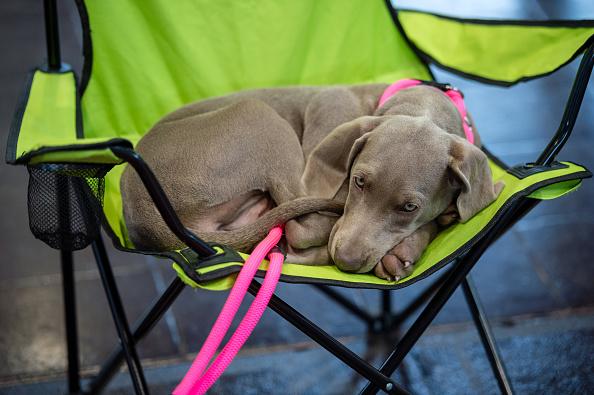 "Pets「Leipzig Holds ""Dog And Cat 2018"" Pets Trade Fair」:写真・画像(11)[壁紙.com]"