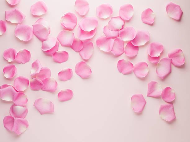 Pink rose petals:スマホ壁紙(壁紙.com)