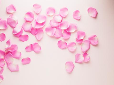 花びら「ピンクのバラの花びら」:スマホ壁紙(8)