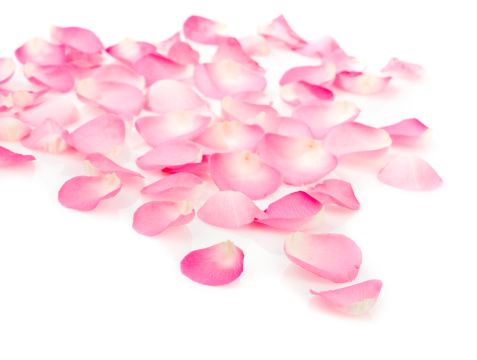 Petal「Pink rose petals on white」:スマホ壁紙(15)