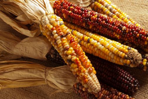 Indian Corn「Dried corn, sometimes called Indian corn」:スマホ壁紙(17)