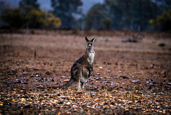 New South Wales「Regional NSW Expected To Run Out Of Water In Coming Months Due To Drought」:写真・画像(8)[壁紙.com]