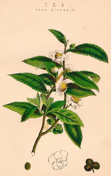 静物「Tea」:写真・画像(5)[壁紙.com]