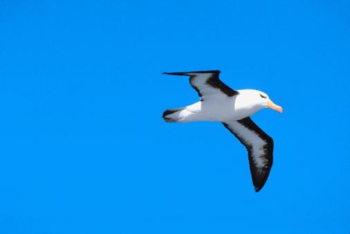 Albatross「Albatross」:スマホ壁紙(16)