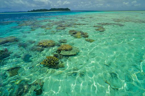 サンゴ「コーラルのパラダイス」:スマホ壁紙(3)