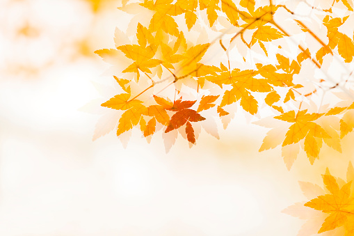 Abstract Backgrounds「Double exposure of Autumn Leaves」:スマホ壁紙(8)