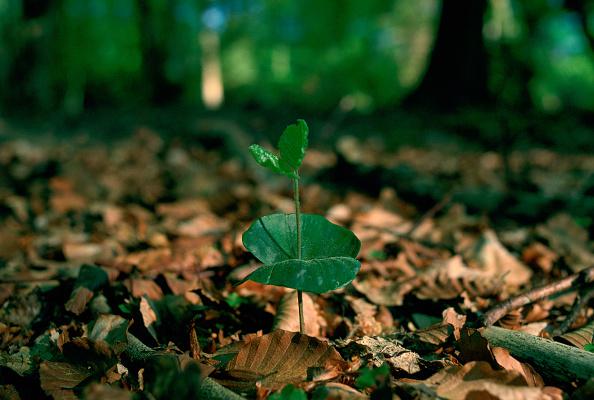 Green Color「Beech Seedling, New Forest, Hampshire, England」:写真・画像(11)[壁紙.com]