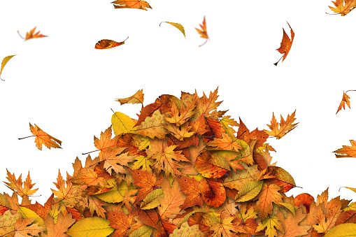 秋「堆積の葉」:スマホ壁紙(8)