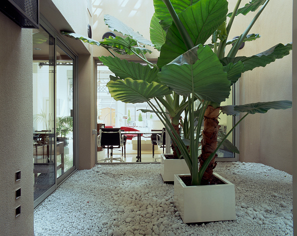 葉・植物「View of a home office through leaves」:写真・画像(8)[壁紙.com]