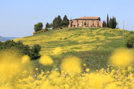 アブラナ「農家と草地でヴァルドルチャ、トスカーナイタリア)」:スマホ壁紙(17)