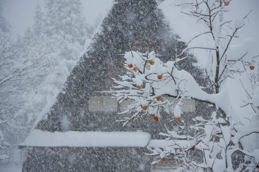 柿「Farmhouse and Snow, Shirakawa, Ono, Gifu, Japan」:スマホ壁紙(13)