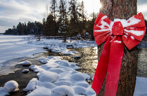 Christmas「Holiday season bow at the headwaters of the Mississippi River in Itasca State Park」:スマホ壁紙(17)