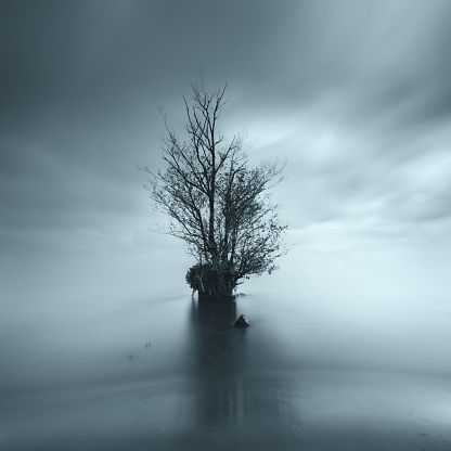 寂しさ「Tree in the middle of a lake, County Antrim, Northern Ireland, UK」:スマホ壁紙(4)