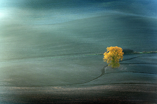 Frost「Tree in the valleyl,autumn,oak,Tuscany,Italy」:スマホ壁紙(10)