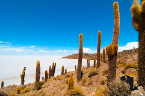 Wilderness Area「Salar de Uyuni」:スマホ壁紙(2)