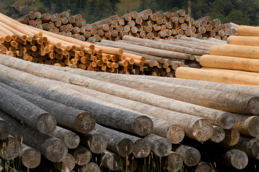 Deforestation「Stacks of Wooden Poles and Pilings at Lumber Mill.」:スマホ壁紙(15)