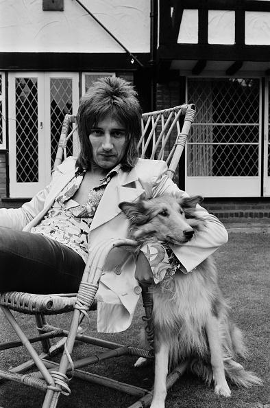 Victor Blackman「Rod's Dog」:写真・画像(14)[壁紙.com]