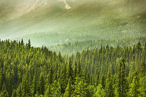 Alberta Wilderness near Banff:スマホ壁紙(壁紙.com)