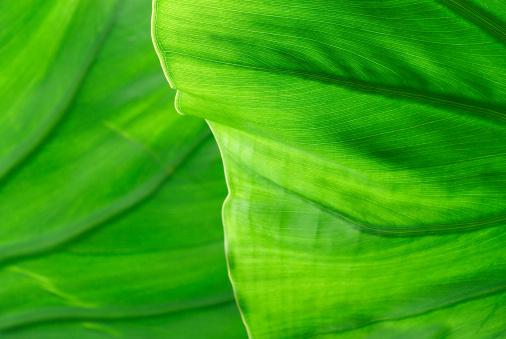 Frond「Palm Leaf Detail」:スマホ壁紙(5)