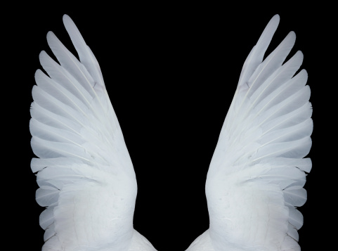 Spirituality「Angel wings, XXXL」:スマホ壁紙(15)