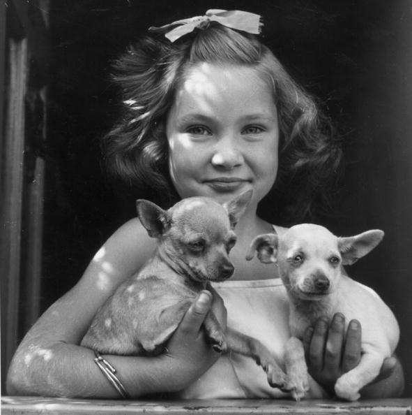 Fred Morley「Two Chihuahuas」:写真・画像(0)[壁紙.com]