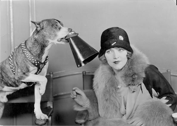 動物「Dog Directs」:写真・画像(13)[壁紙.com]