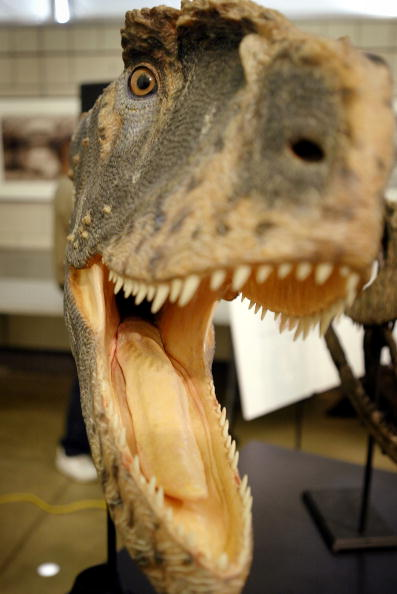 Animals Hunting「Recently Discovered Dinosaur Introduced In Chicago」:写真・画像(19)[壁紙.com]