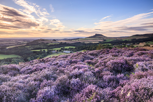 North Yorkshire「Roseberry Topping in the North York Moors.」:スマホ壁紙(0)