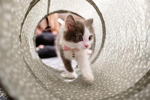 Exploration「Kitten Exploring Her Surroundings」:スマホ壁紙(10)