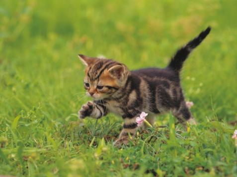 子猫「Kitten exploring lawn」:スマホ壁紙(1)