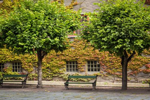 France「Autumn Courtyard」:スマホ壁紙(19)