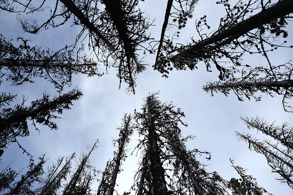 Mountain「Montana Forests Struggle With Climate Change」:写真・画像(9)[壁紙.com]