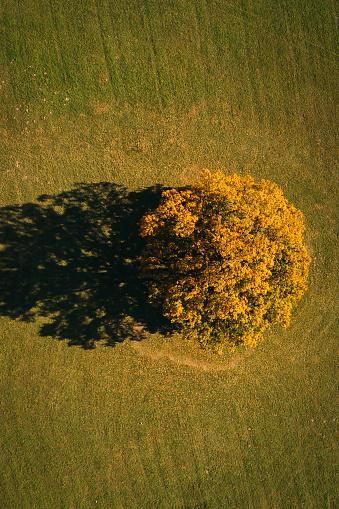 Grove「Austria, Lower Austria, aerial view of colorful autumn grove in field」:スマホ壁紙(17)
