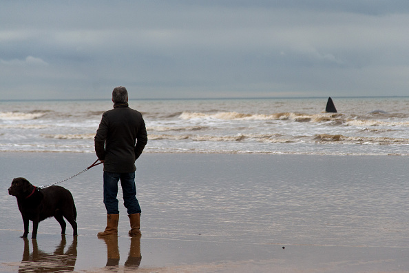 Aquatic Mammal「Sperm Whale Beaches At Hunstanton」:写真・画像(19)[壁紙.com]