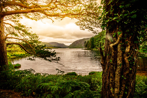 Irish Culture「Tranquil Scene from Killarney National Park, Ireland」:スマホ壁紙(6)