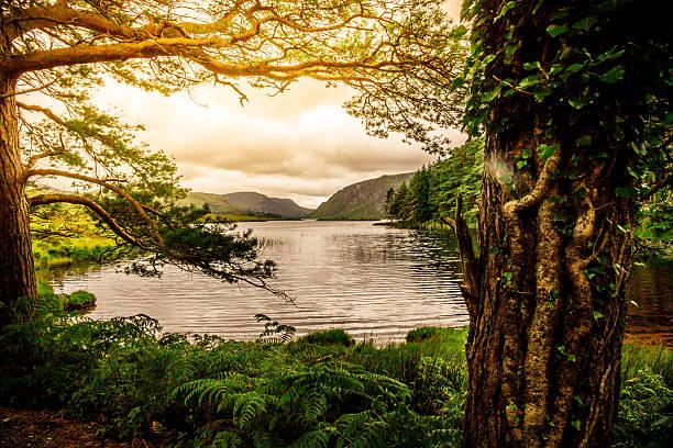Tranquil Scene from Killarney National Park, Ireland:スマホ壁紙(壁紙.com)