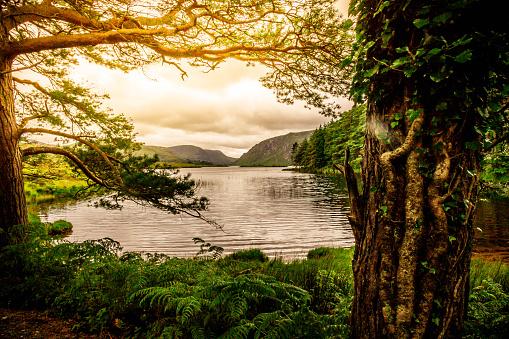 Tranquil Scene「Tranquil Scene from Killarney National Park, Ireland」:スマホ壁紙(10)